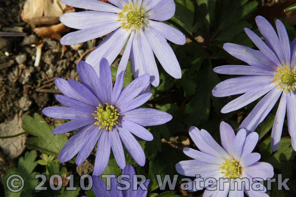 photo-watermark-example-blue-flower
